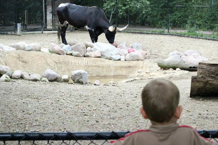 170 miller park zoo