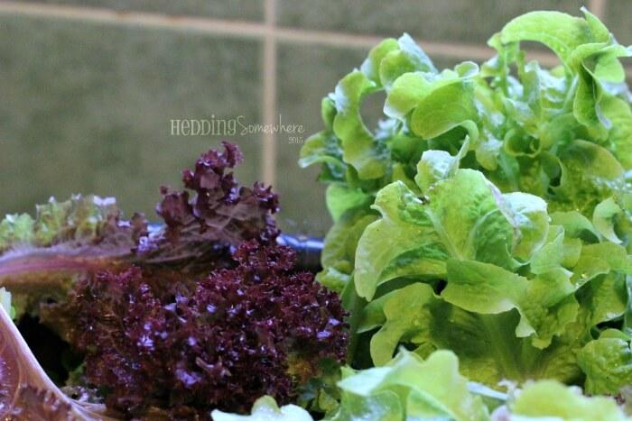 203 fresh salad